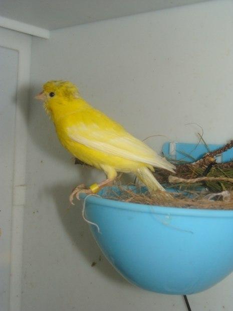"""Фотографии """"птичей комнаты""""  - Страница 2 MT3yiQl5uj0"""