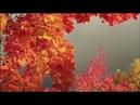 🌲 🌳 🍁 🍇 Совега. Солигалич. Самые красивые места России. Фильм Екатерины Перцевой 🐶 🐱 🐖