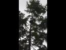 мос зоопарк еноты2