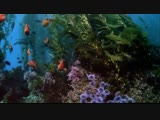 Wonderful Chill Out Music - The Depth Of Ocean Hd
