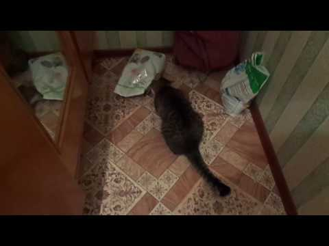 кошачья наглость - второе счастье
