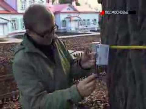 Обследование дуба в Подмосковье, музей-заповедник Абрамцево. Телеканал «Подмосковье»
