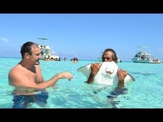 80. Жизнь в США - Супер экскурсия Плавание со СКАТАМИ! Круиз по Карибскому морю - Каймановы острова
