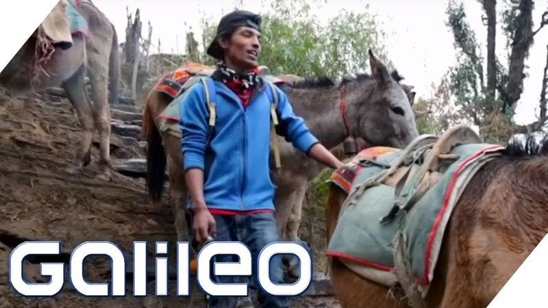 Esel statt Auto So leben 18-Jährige in Nepal | Galileo | ProSieben