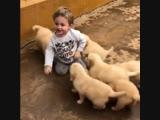 Малыш в вольере с щенками