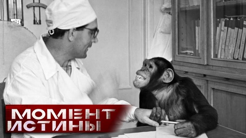 Зачем в СССР пытались создать гибрид обезьяны и человека