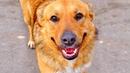 Удивительная история! Как умудренный уличной жизнью пёс Рекс хорошо устроился...