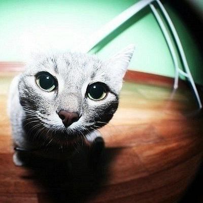 Polly Meow, 11 апреля 1997, Ижевск, id175526008