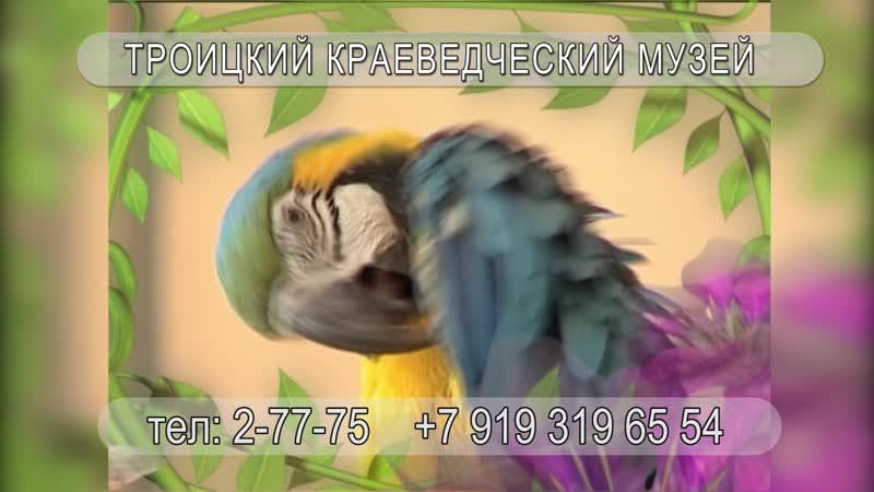 Певчие птицы мира и родного края.