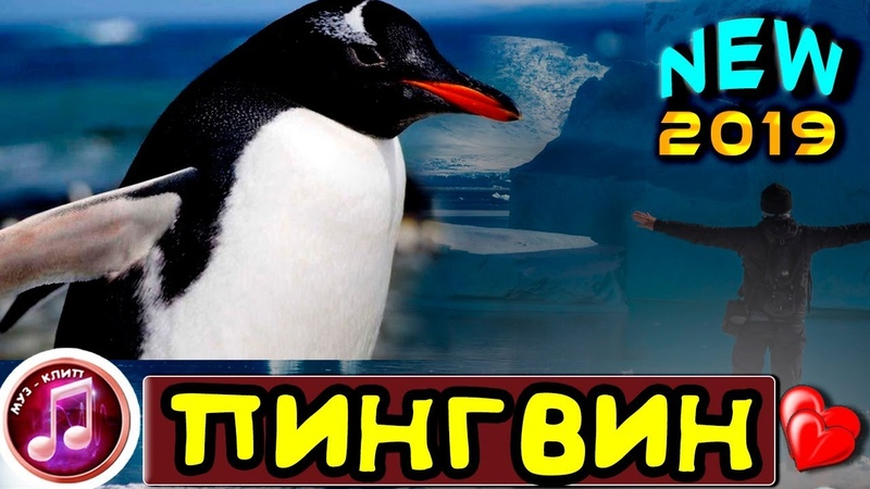 ОБАЛДЕТЬ КАКАЯ ПЕСНЯ Пингвин НОВИНКА 2019 ✅❤️