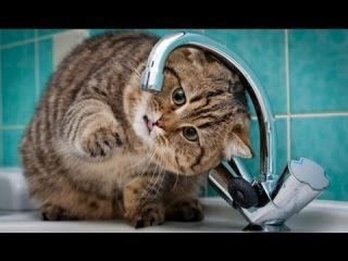 Подборка самых прикольных котов со всего интернета за 2013 год