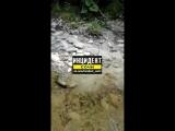 Слив цемента и строительных отходов в реку Дагомыс