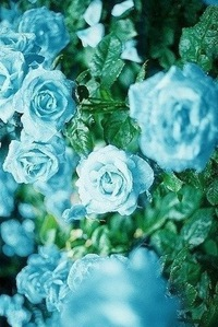 Фото берёзовый цвет