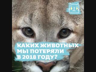 Животные, которых мы потеряли в 2018 году