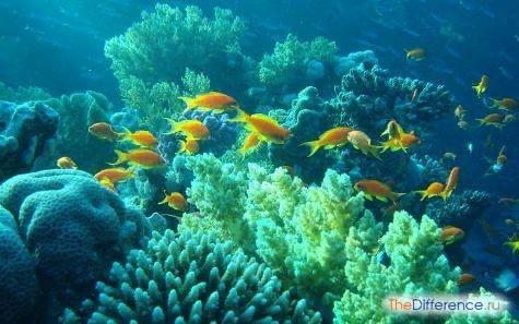 Разница между наземно-воздушной и водной средой Важнейшие биологические среды обитания живых организмов наземно-воздушная и водная. В чем заключается их спецификаЧто представляет собой