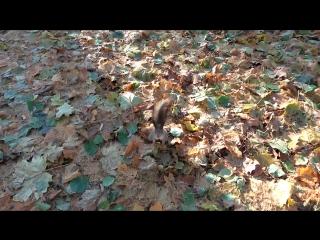 Беличьи нычки на зиму-6