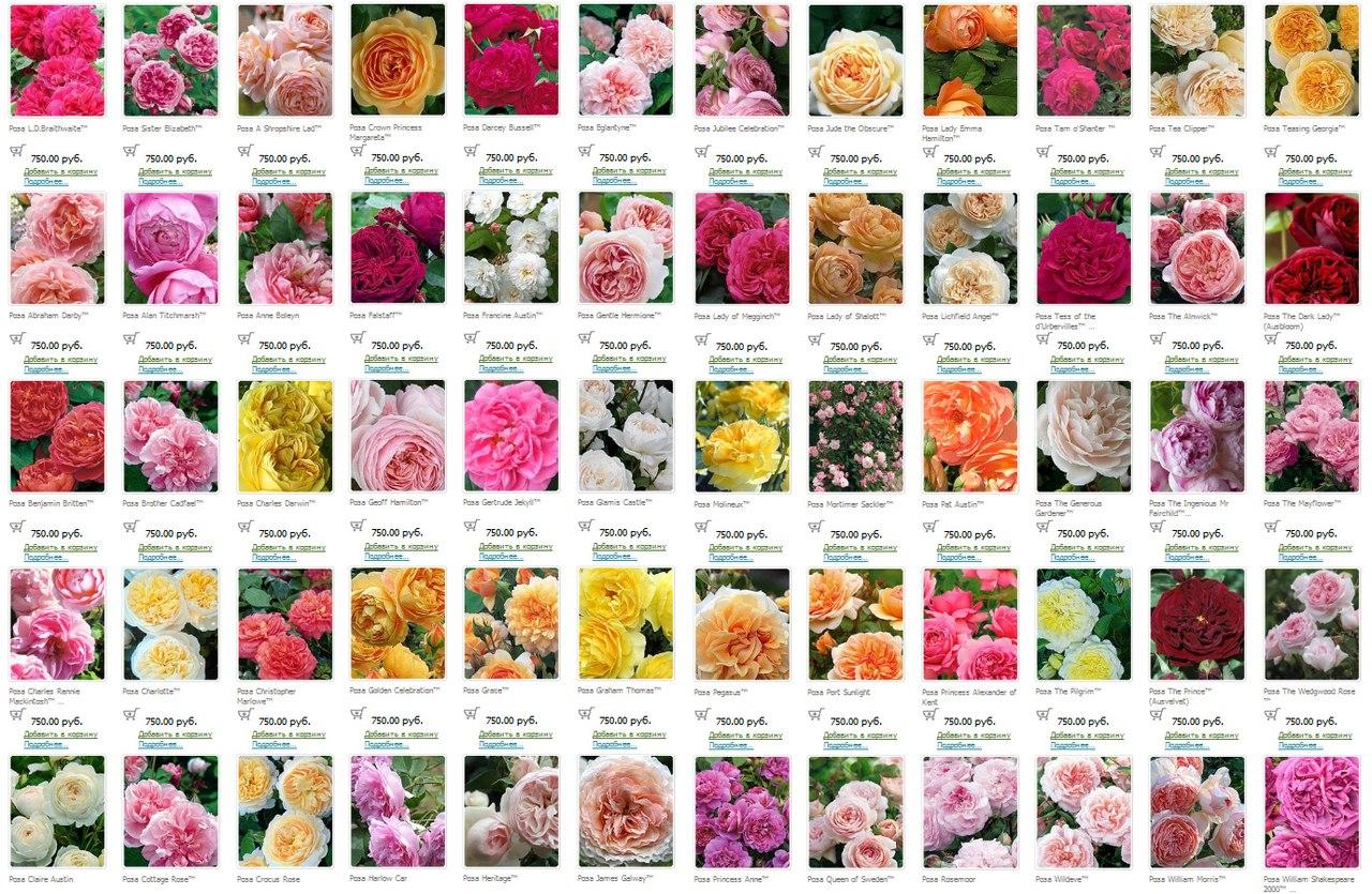 Каталог цветов и названиями описанием сорта