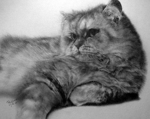 Танец кошки