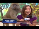 Frisky fella! Baboon gropes TV reporter l