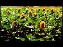 ЗАКОНЫ ГАРМОНИИ ВСЕЛЕННОЙ ~ Фильм Василия Тушкина (H.G. Vrajendra Kumar Prabhu)