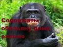 Как живут обезьяны в минском зоопарке