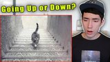 Is The Cat Going Up or Down The Stairs? (The Eye-Q Test)