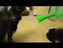 Собака пол обоссака