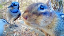 Video For Cats and Dogs - Forest Birds and Chipmunks