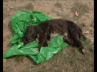 Убийство собаки в Дзержинске