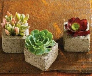 Домашний кактус: виды, размножение, посадка, полив