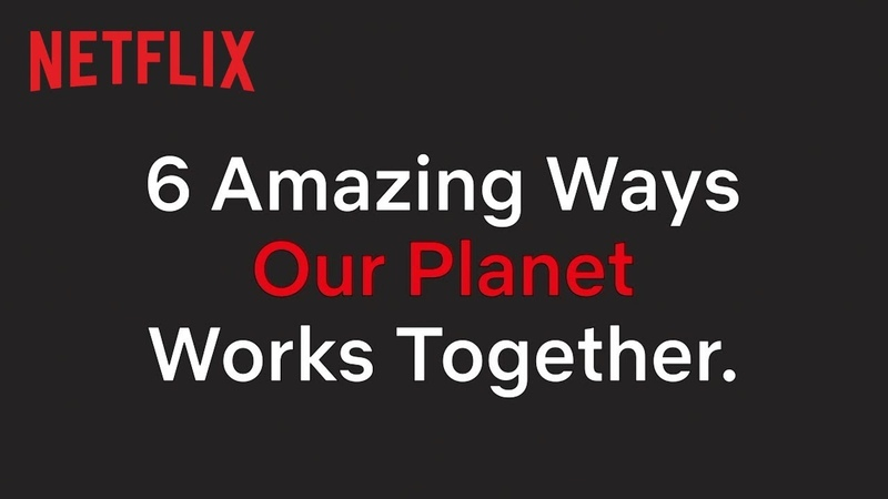Unlikely Animal Friendships in Our Planet | Netflix