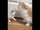 - Ну маааам, я уже чистый!