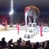 """@lis_help_animals on Instagram: """"за_цирк_без_животных Слоны в цирке – это всегда нечто особенное. Величественные великаны (со сломленной волей, н..."""