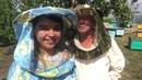 Как пчелы делают мёд? Пасека Гатуповых nonadim