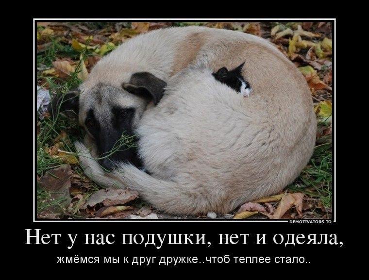 Сне, честное телеканал тнт смотреть онлайн прямой эфир бесплатно в хорошем качестве Кутакова обыскивали