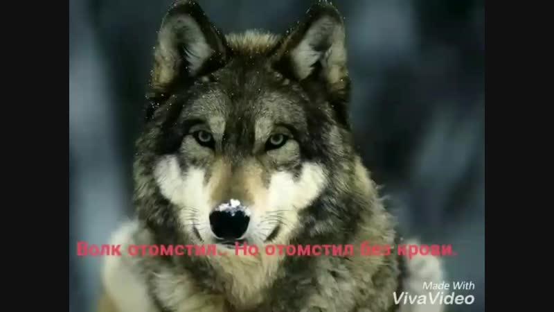 Video 35629eb3a12621c06724aa9c3a249aad