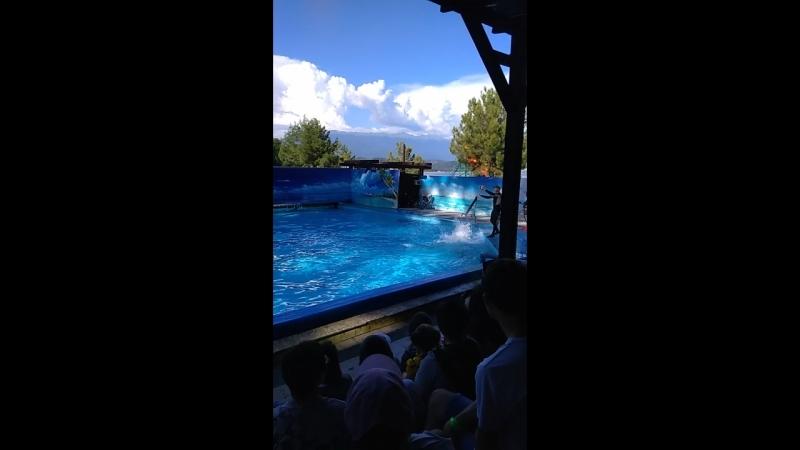 Дельфины играют с мячиками