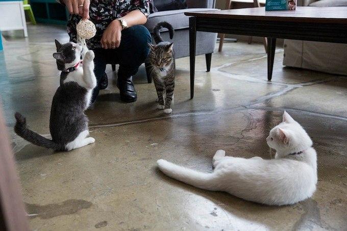 у каждой кошки есть свой «кошкин дом»