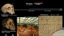 История и доисторические времена часть 1 Хронология эволюции человека Всемирная История