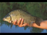 секреты рыбалки ловля карасей на поплавок