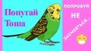 ПОПРОБУЙ не ЗАСМЕЯТЬСЯ...КАК волнистый попугай смотрит передачи на ПЛАНШЕТЕ / зеленый попугайчик TV