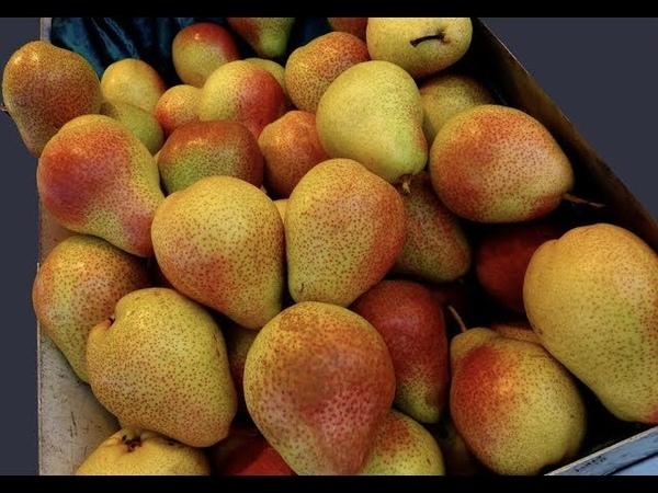 «Продуктовый терроризм»: кто подкладывает иглы в австралийские фрукты?