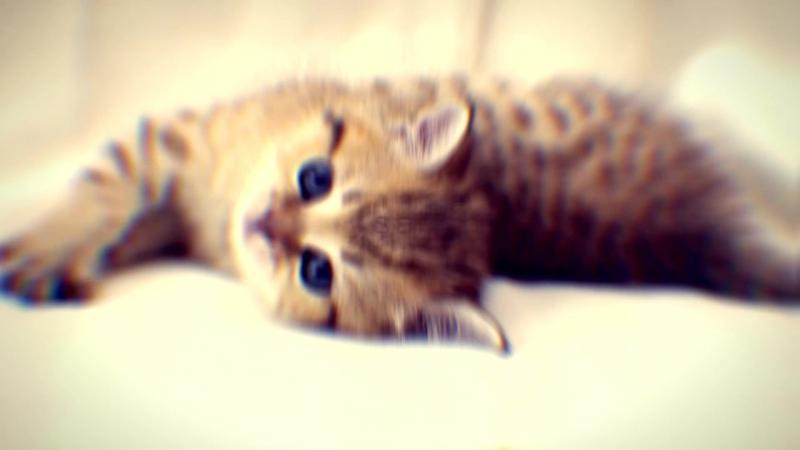 видео с нелепыми котятами