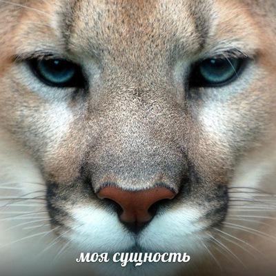 Елена Руднева, 6 октября , Москва, id221885829
