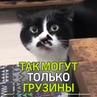 """Маленькие Большие НОВОСТИ on Instagram: """"В Сети становится вирусным видео с котиком, который знает грузинские песни. 💂Оно и понятно, ведь так душев"""