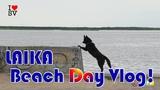 Собака, которая тоже любит смотреть на море - LAIKA Beach Day Vlog!