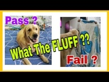WHAT THE FLUFF CHALLENGE Did you try this with your Pet !!