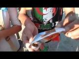 الجزائريون ينشرون ثقافة الشمة في البرازي&#160