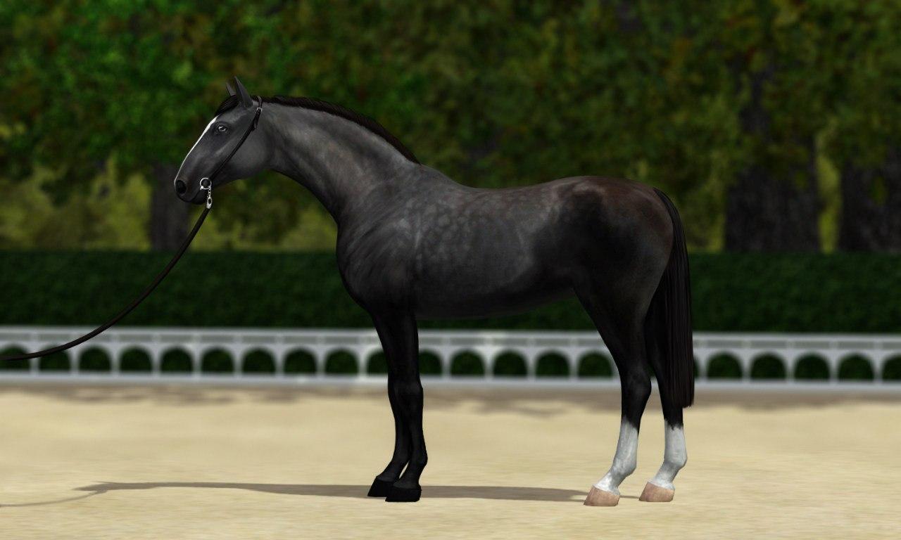 Регистрация лошадей в RHF 1.1 - Страница 39 7L2r9HOfhOA