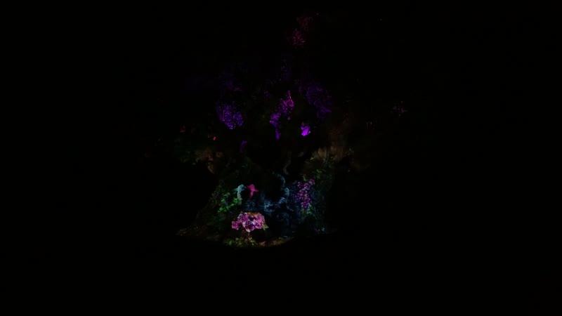 Вечернее шоу в парке Animal Kingdom – Проекция на Древо Жизни –1